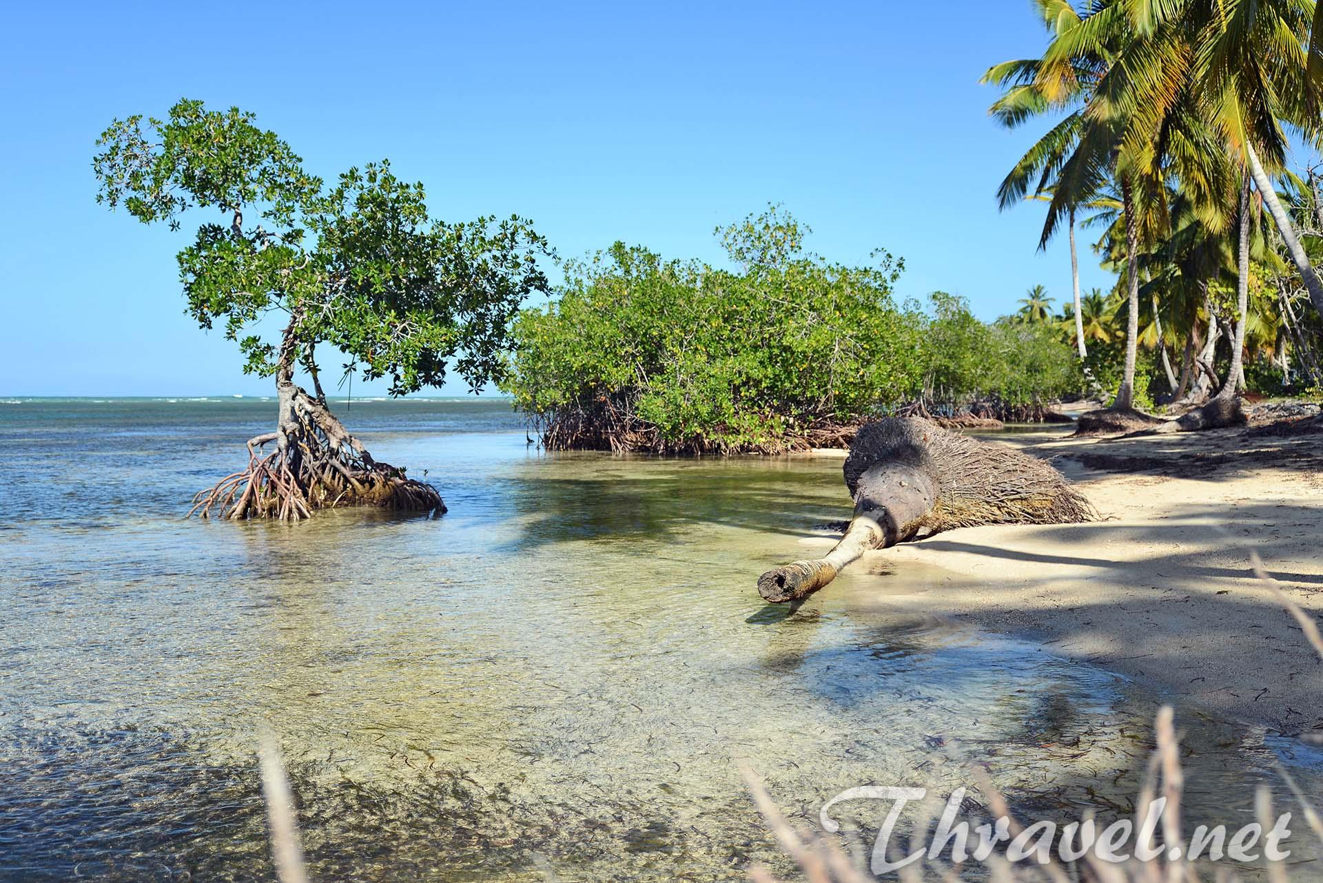 grand-bahia-principe-mangrove-trees