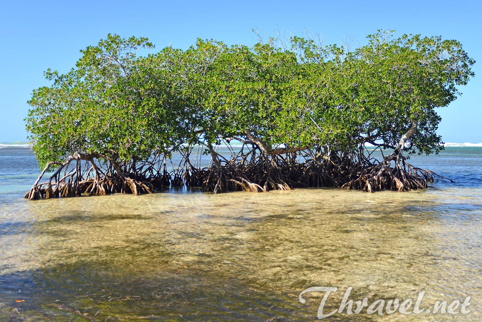 mangrove-trees-photo
