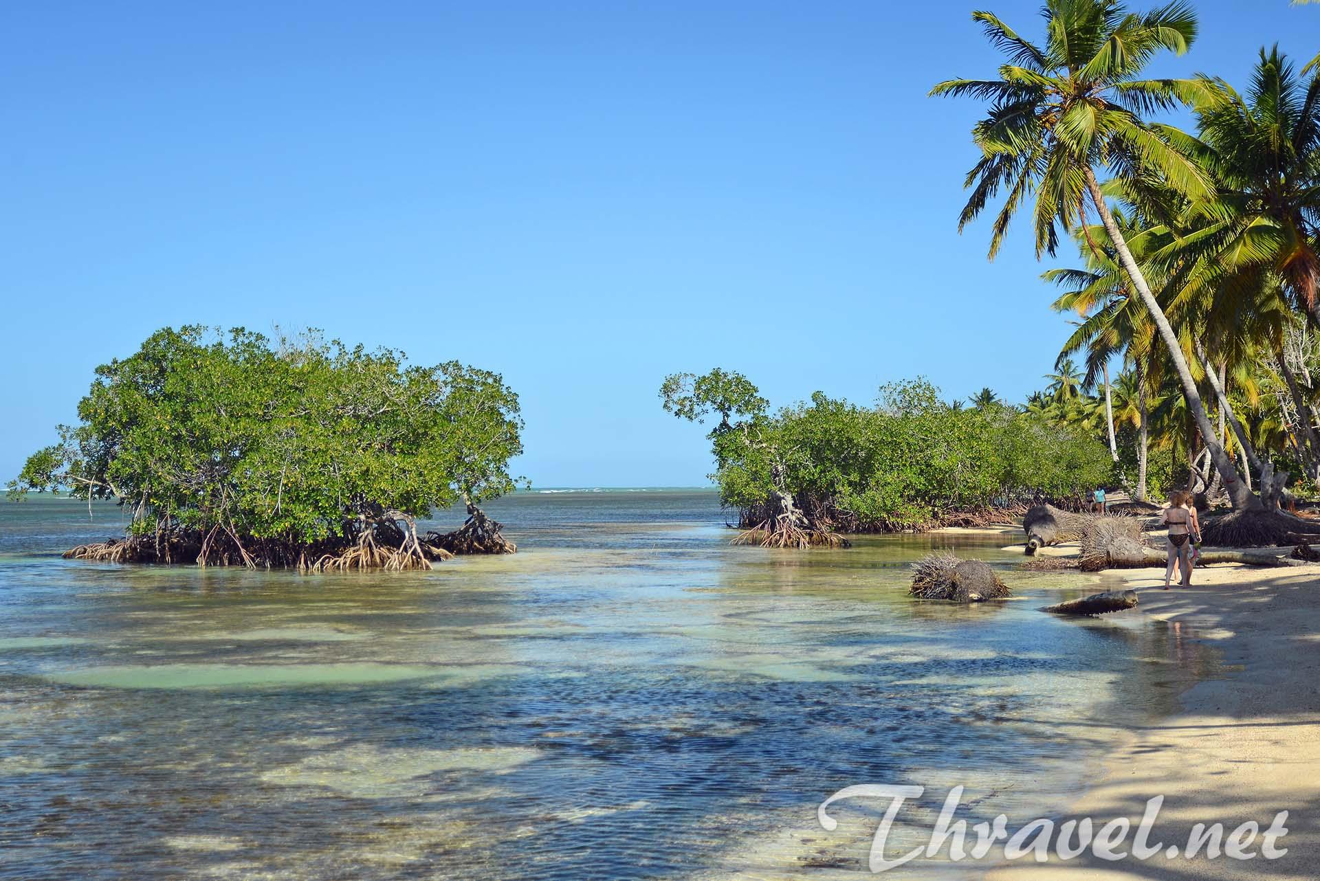 samana-mangrove-trees