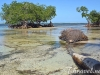 samana-mangrove-trees-on-the-beach