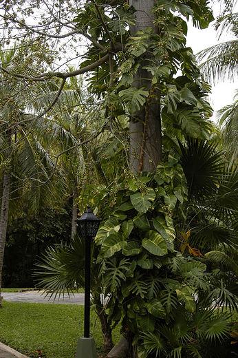 hotel-riu-tequila-playa-del-carmen-mexico-_-garden-4