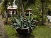 hotel-riu-tequila-playa-del-carmen-mexico-_-garden-3