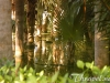 riu-bambu-garden