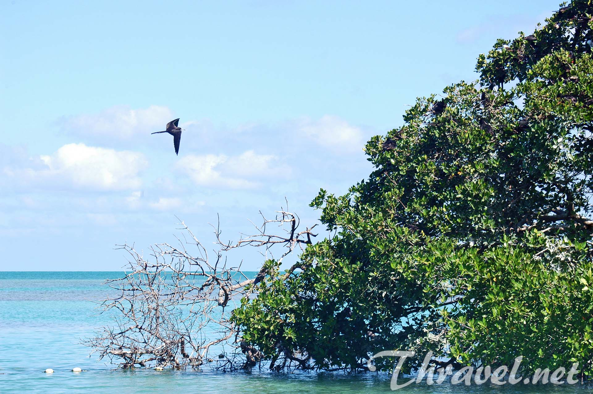 sian-ka-an-tropical-birds-photo