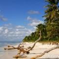 Saona Island – a Trip to the Tropical Paradise