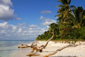 Saona Island – a Trip to the Tropical Paradise