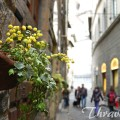 Trip To Florence – Thravel Facts You Should Know