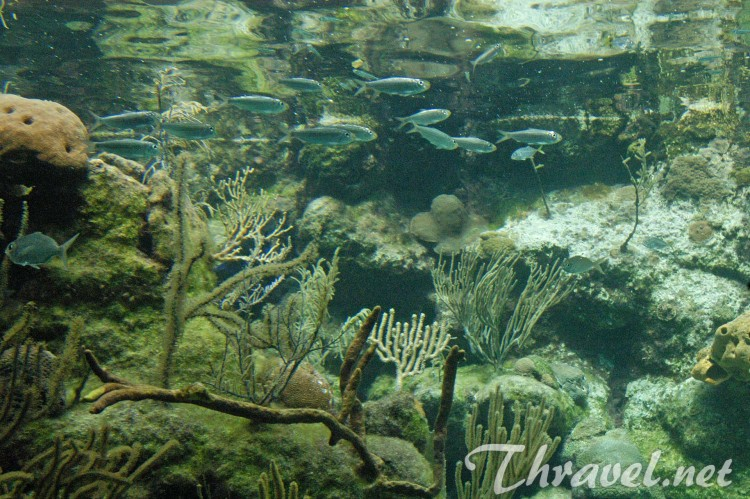 Aquarium in Xcaret Park