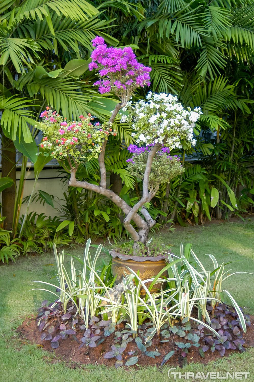 Thara Patong Beach Resort & Spa Review